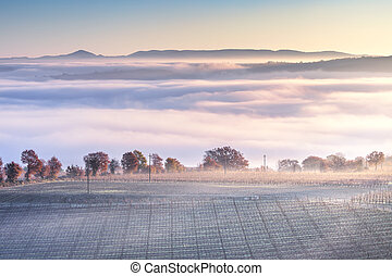 Tuscany foggy winter panorama, rolling hills and vineyard. Italy