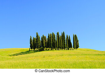 Tuscany forest 01