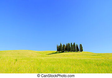 Tuscany forest 02