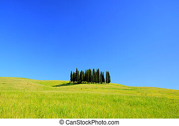 Tuscany forest 03