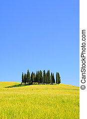Tuscany forest 04