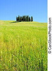 Tuscany forest 07