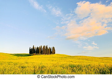 Tuscany forest 08