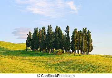 Tuscany forest 10