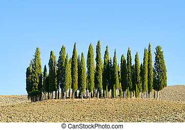 Tuscany forest in fall