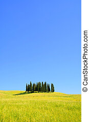 Tuscany forest