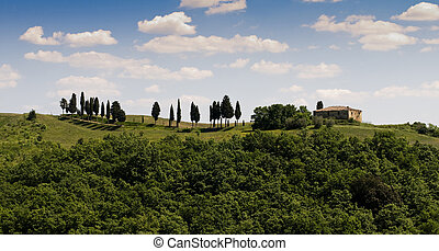 Tuscany - Green tuscany landscape in spring time close up