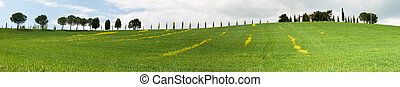 Overview of a hill with striped yellow flowers in Grosseto, Tuscany
