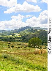 (tuscany, italy), maremma