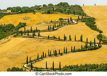 (tuscany), krajobraz, val, d'orcia