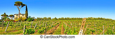 Tuscany landscape panorama with vineyard at sunset