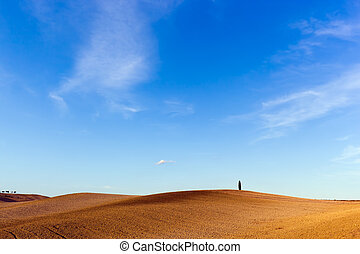 Tuscany landscape with a lonely cypress tree, Italy.