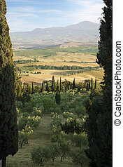Tuscany Landscape with cypress. Suburbs of Pienza town, ...