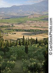 Tuscany Landscape with cypress - Tuscany Landscape. Suburbs...
