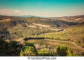 Tuscany landscape with green meadows, vineyards, forests. Italy. Aerial