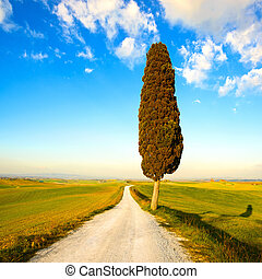 Tuscany, lonely cypress tree and white rural road on sunset. Siena, Orcia Valley, Italy, Europe.