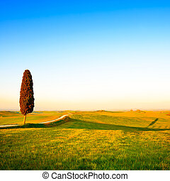 Tuscany, lonely cypress tree, white rural road and shadow on on sunset. Siena, Orcia Valley, Italy, Europe.
