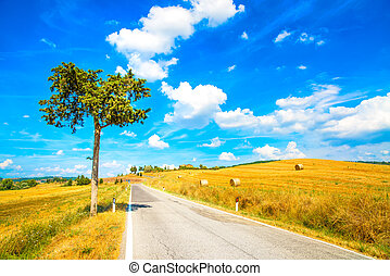 Tuscany, lonely tree and straight road. Siena, Val d Orcia, Italy.
