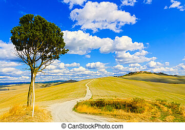 Tuscany, lonely tree and white rural road. Siena, Orcia...