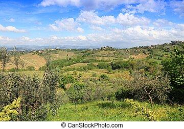 Tuscany olive groves