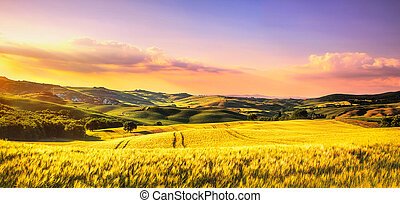 Tuscany spring, rolling hills at sunset. Rural landscape....