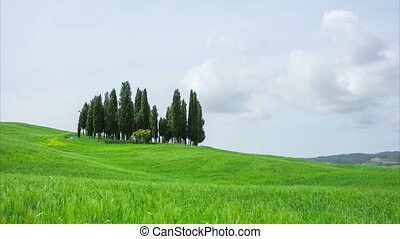 Tuscany, summer landscape with cypress and the blue sky,...