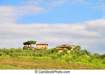 Tuscany vineyard 01