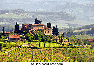 Tuscany vineyard 03