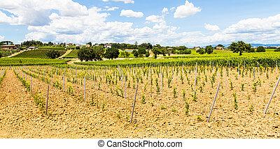 Tuscany Wineyard - Italy, Tuscany region, Orcia Valley. A...