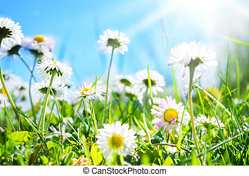 tusenskönor, blomma, äng
