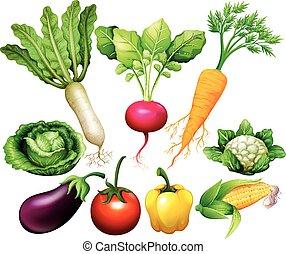 tutto, tipo, di, verdura