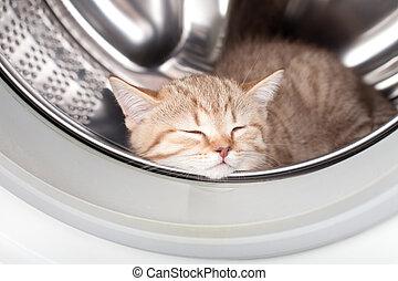 tvättstuga, insida, sova, kattunge, packning, lögnaktig