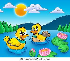 två, ankan, och, vatten lillies