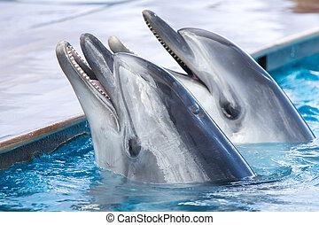 två, delfiner, in, den, slå samman