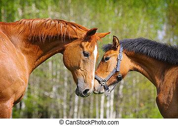två, hästar