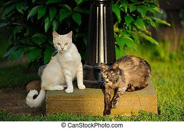 två, katter, utomhus