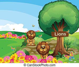 två, lejonen, i trädgården, med, a, trä, skylt