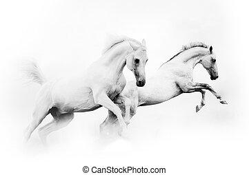 två, mäktig, vita bygelhäst