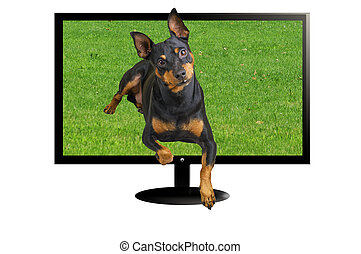 TV 3 D with dog in three dimension