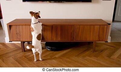 tv, sauts, chien, aboiements