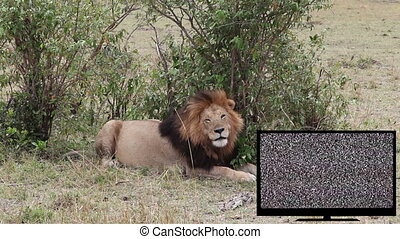 TV with green screen and a lion on