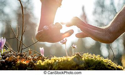 twee, beschermend, handen, boven, breekbaar, wilde bloemen