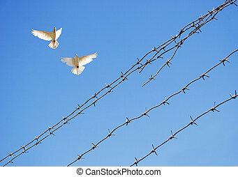 twee, duiven, in, hemel