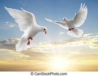 twee, duiven