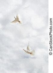 twee, duiven, vliegen, op, sky.