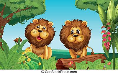 twee, leeuwen, in, de, bos