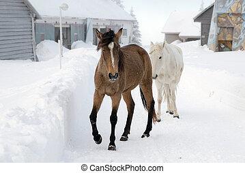 twee, paarden, in, besneeuwd, land