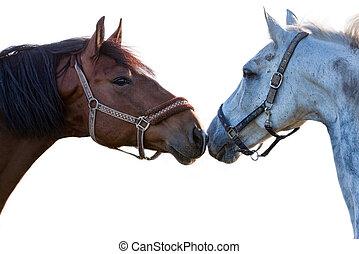 twee, paarden, op, een, witte achtergrond