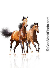 twee, paarden, op wit