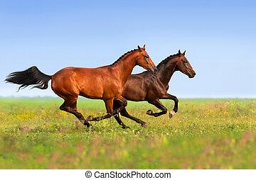twee, paarden, uitvoeren